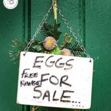Eggs-for-sale